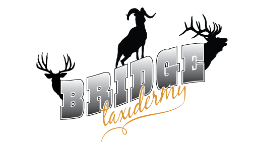 Bridge Taxidermy Logo